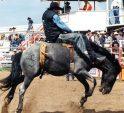 Cowboys and Anglers